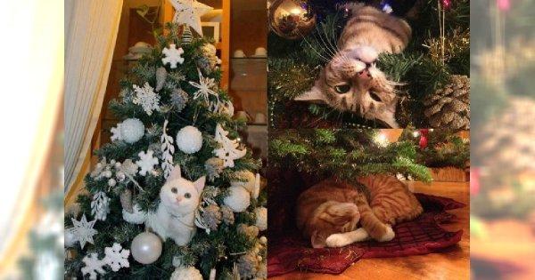 Zdjęcia Z Kotem I Choinką W Roli Głównej To Najlepsza Rzecz Jaką