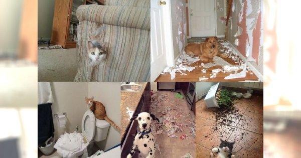 Co się może wydarzyć, kiedy zwierzak zostanie sam w domu? Poznaj największych psotników, których pokochali internauci na całym świecie!