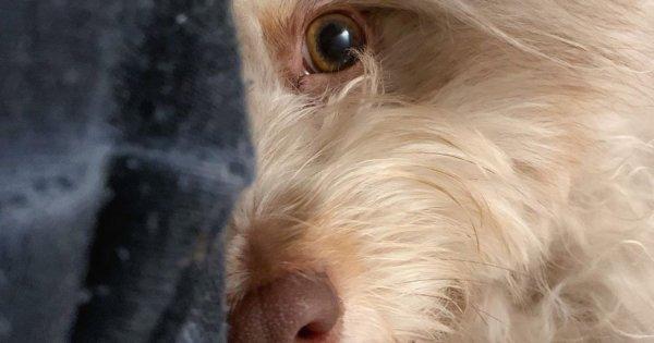 Pies z ludzką twarzą podbił Internet. Te zdjęcia zwalą Was z nóg! Ludzie nie dowierzają, że zwierzę jest prawdziwe.
