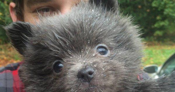 Pies został przygarnięty z ulicy, a nowi właściciele myśleli, że to nowa rasa. Prawda okazała się szokująca (WIDEO)