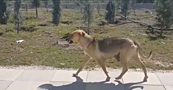 Pies zabrał miskę z jedzeniem i niósł ją w pysku. Kierowca podążał za nim i odkrył coś wstrząsającego