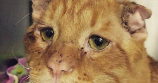 Najsmutniejszy kot na świecie otrzymał kochający dom. To jak teraz wygląda, wprowadza w osłupienie