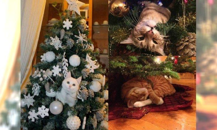 Zdjęcia z kotem i choinką w roli głównej to najlepsza rzecz, jaką dziś zobaczycie. Zadanie: ZNAJDŹ KOTA