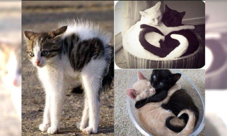 Światowy Dzień Kota 2018: Koty w kształcie serca to najsłodsze, co dziś zobaczycie