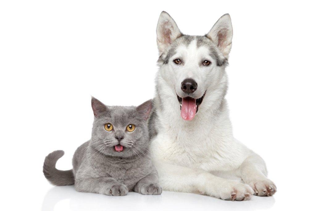 Pies i kot_zdjęcie aranżacyjne