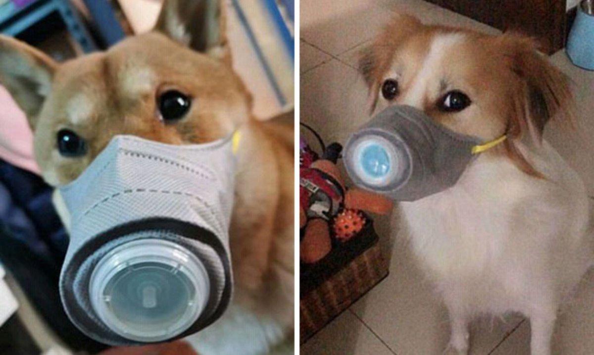 Koronawirus: Zapotrzebowanie na maseczki dla psów w Chinach rośnie. Czy stanowią ochronę?