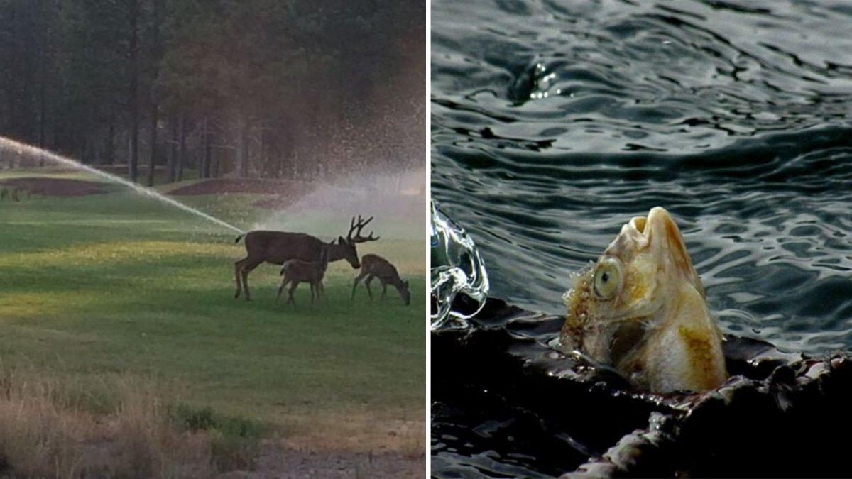 """28 dzieł domorosłych fotografów przyrody. To na pewno """"najlepsze z najgorszych"""" zdjęć zwierzaków"""