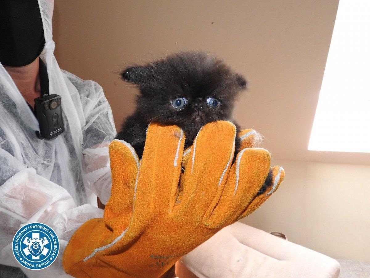Szokujące obrazy z hodowli kotów w Piasecznie. Zwierzęta przetrzymywane w tragicznych warunkach