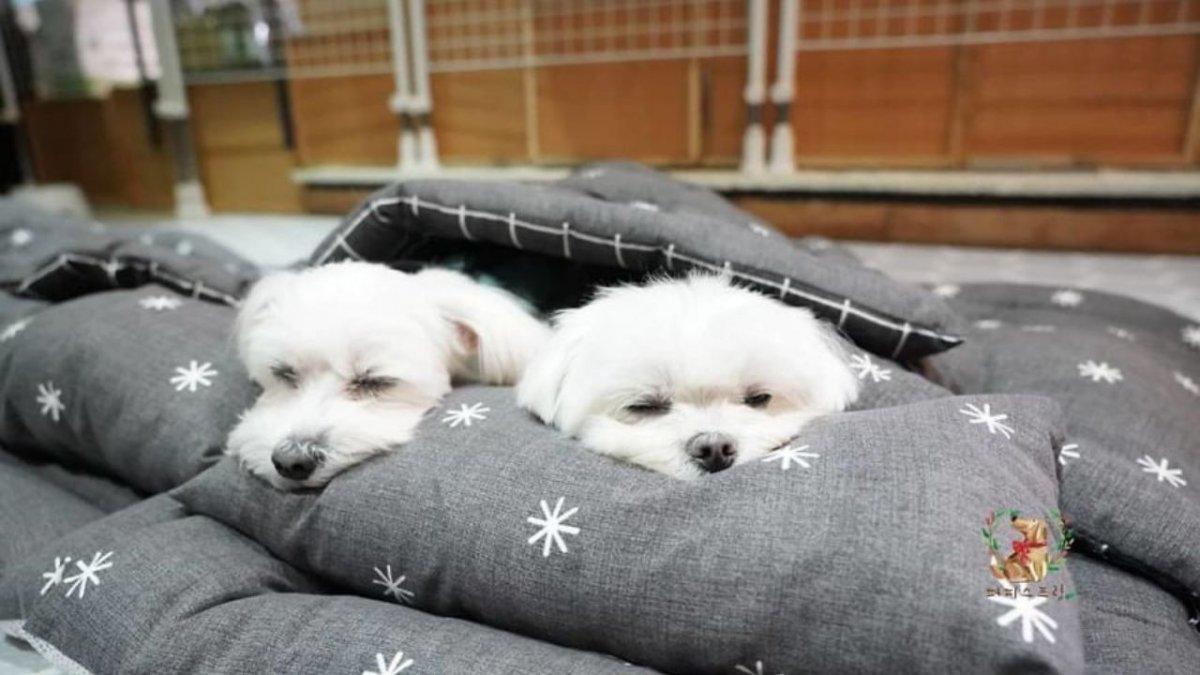 Macie gorszy humor? Te zdjęcia śpiących szczeniaków na pewno zrobią wam dzisiaj dzień!