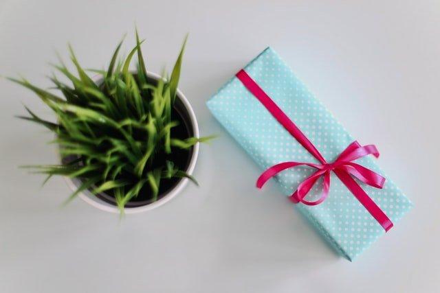 niebieski prezent z różową wstążką obok doniczki z zielonym kwiatem na białym tle