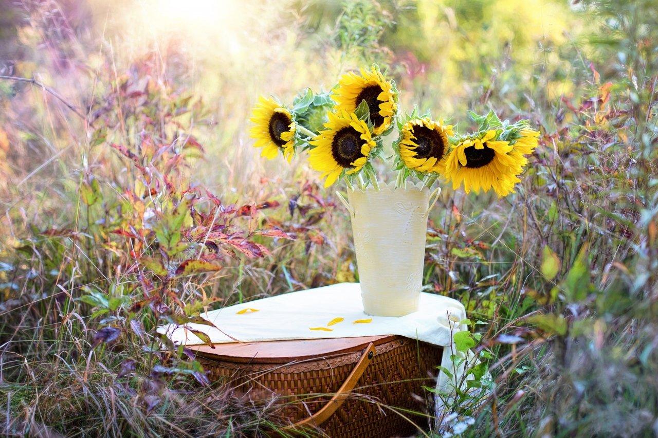 żółte słoneczniki w wazonie