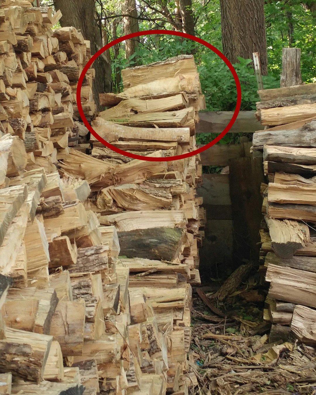 Rudy kot spiący na drewnie - rozwiązanie zagadki