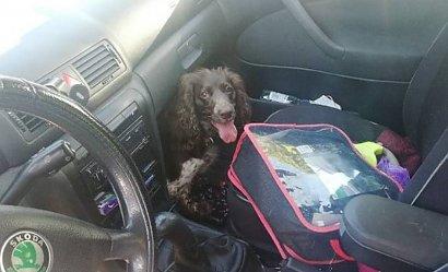 Gdynia: Pies zamknięty w samochodzie. Właściciel bawił się w najlepsze, a zwierzę konało
