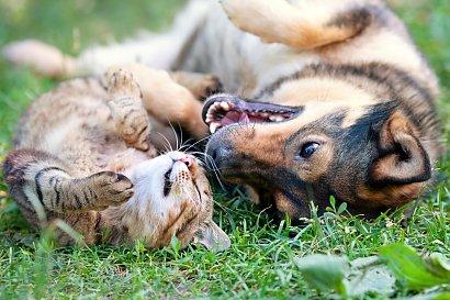Czy jest prawdą, że koty to dranie? Te zdjęcia pokazują, że coś w tym jest ;)