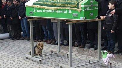 Pies został ze swoim panem do samego końca. Wierny towarzysz nie opuścił go nawet po śmierci