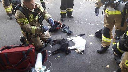 Wzruszające zdjęcia z akcji strażaków w Gdyni. Z pożaru uratowali wszystkich - nie tylko ludzi