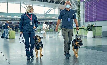 Psy wykrywają koronawirusa?! Okazuje się, że ich skuteczność jest niemalże stuprocentowa!