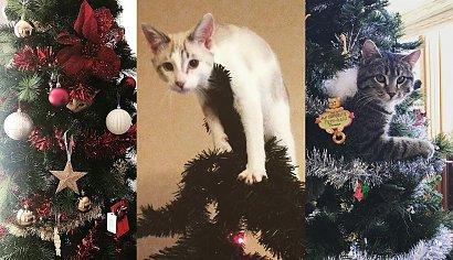 Koty na choinkach to najlepsze, co dziś zobaczycie! 25 zdjęć. Jesteście gotowi?