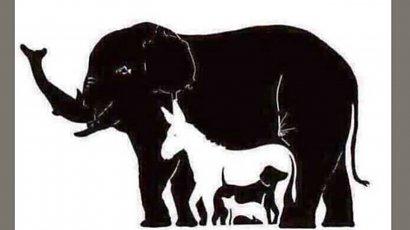 Ile zwierząt widzisz na obrazku? Większość internautów nie potrafi wskazać prawidłowej odpowiedzi