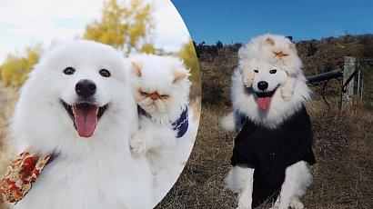Wiecznie naburmuszony kot i wiecznie uśmiechnięty pies. Ten duet idealny skradł serca internautów!