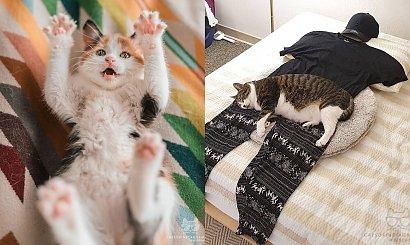 Światowy Dzień Kota: 20 zdjęć kotów, które poprawią ci humor. Najsłodszy to nr 5