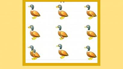 Ile kaczek widzisz na zdjęciu? Tylko najbystrzejsi są w stanie dostrzec wszystkie! Uda Ci się?