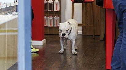 """Pies załatwił się w... Galerii Krakowskiej! Właścicielka uciekła, pozostawiając w budynku """"śmierdzący problem""""!"""