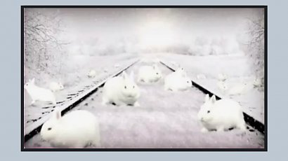 Ile królików widzisz na zdjęciu? Tylko 1% osób potrafi odgadnąć tę zagadkę! Podejmiesz wyzwanie?