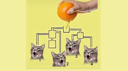 Ta zagadka robi furorę w sieci! Tylko 1 na 10 osób potrafi ją rozwiązać! Podejmiesz wyzwanie?