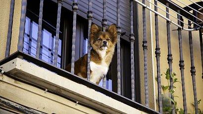 """""""Sąsiedzi zamykają psa na balkonie w bloku! Pół dnia szczeka i piszczy, aż serce pęka! Co mogę zrobić?"""""""