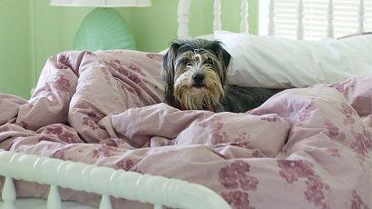 """""""Pies mojego chłopaka śpi z nim w łóżku. To już jest przesada! Jak zamieszkamy razem, to się skończy!"""""""