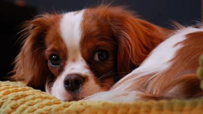 Podróżowanie z psem – jak się do tego przygotować?