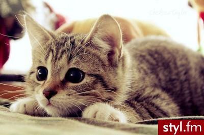 Koty Zwierzaki
