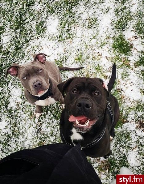 Psy Zwierzaki